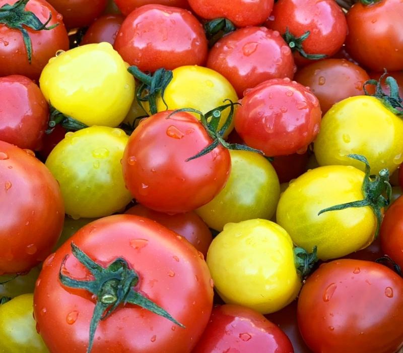 栄幸ファームは減農薬でトマト栽培しています。